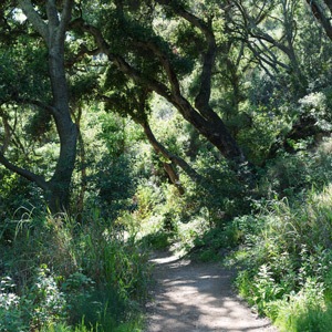 sweeping views to the santa ynez mountains and the santa barbara channel islands and stunning landscapes the santa barbara botanic garden is a great - Santa Barbara Botanic Garden